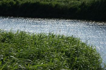 Grass020sz900