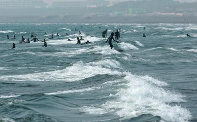 Surfer007sz900
