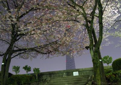 Asakusa014sz900