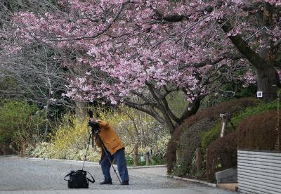 Sakura061sz800