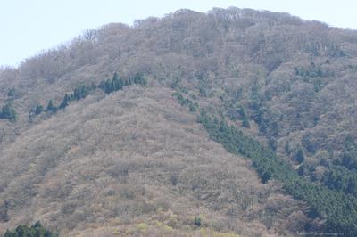 Haruyama022sz1200