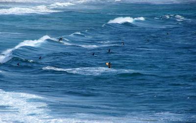 Surfer009sz1000
