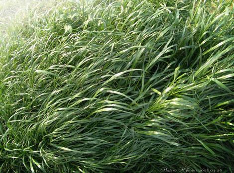 Grass011sz700