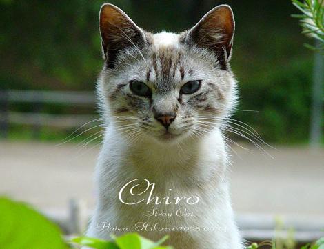 chiro001sz470