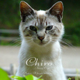 Chiro001sz800