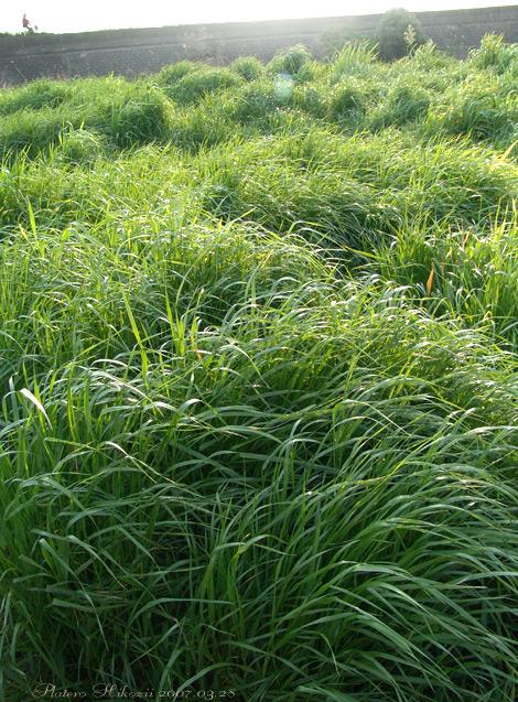Grass010sz470